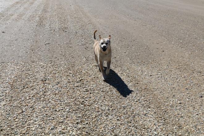 rachel running 2