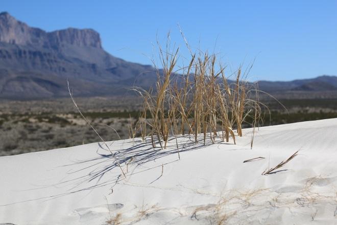 weedy sand dune