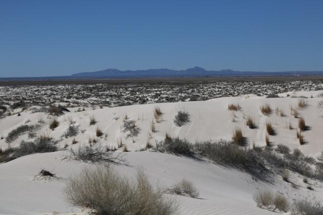 weedy snad dunes